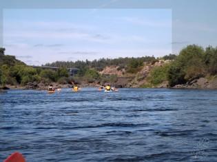 Quase a chegar à ponte que atravessa para Alvega, o Arlindo diz que esta parte do rio é muito importante para o peixe.