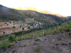 Naquele vale ainda se conseguem perceber os antigos olivais que por ali existiam…