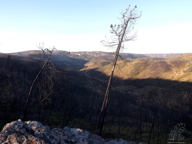 Já lá em cima consegue-se ver a serra da Alfeijoeira ao longe…