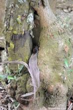 Em seguida coloquei-o perto de uma reentrância de uma árvore na esperança que servisse de abrigo até a noite chegar…