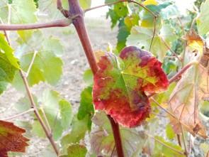 Com a chegada do Outono, as folhas começam a mudar de cor...